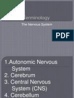 Terminology Nervous System