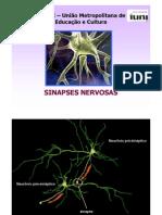 Aula Morfo-func 03 - Sinapses 2012
