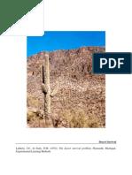 CASO El Desierto Instrucciones