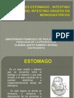 Funciones Estomagos , Intestino Delgado, Intestino Grueso