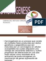 oncologia carcinogenesis