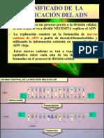 """REPLICACIÃ""""N DEL ADN"""