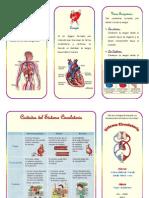 Triptico de Sistema Circulatorio