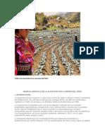 Cultivo de alcachofa en la serranía del PERU