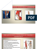 1. Tendon y Ligamentos
