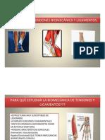 1. Tendon y Ligamentos