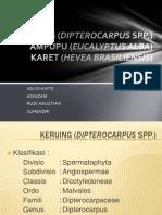 Dendrologi - Keruing, Ampupu, Karet