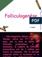 g Folliculogenese