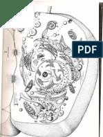 Imgens de Microscopia Electrónica