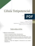 Célula Totipotencial