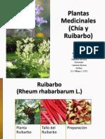 Ruibarbo y Chía
