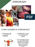 7-Embarazo y Parto