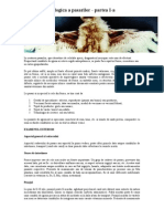Anatomia Patologica a Pasarilor