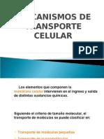 1MedioTransportecelular2