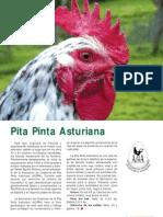 Pita Pinta