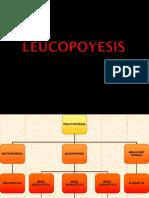 6.- Leucopoyesis