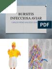 Bursitis Infecciosa Aviar