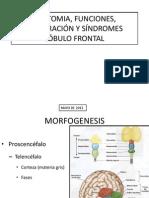 Anatomia Funciones Trastorno y Exploracion Lobulo