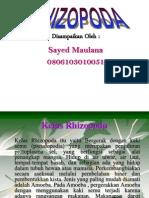 kelas-rhizopoda