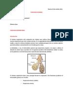 Clase 01 - Fisiologia Respiratoria
