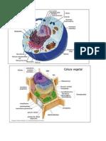 Bioquimica estrutura celulares