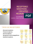 RECEPTORES SENSITIVOS – CIRCUITOS NEURONALES