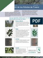 Identificación de los Árboles de Fresno