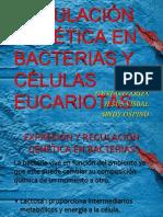 EXPRESIÓN Y REGULACIÓN GENETICA EN BACTERIAS Y CÉLULAS