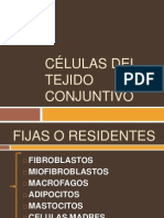 Celulas Del Tejido Conjuntivo