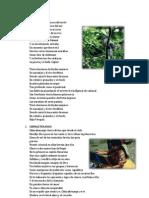 Canciones Guatemaltecas 25