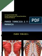 Clase 04 Pared toráxica y region mamaria