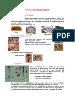 TEMA 7  - Paleobotánica