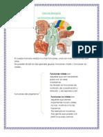Funciones del organismo, sistema de órganos