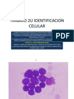 Identificacion Celular 2u Hii 2012