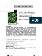 Colobanthus pulvinatus