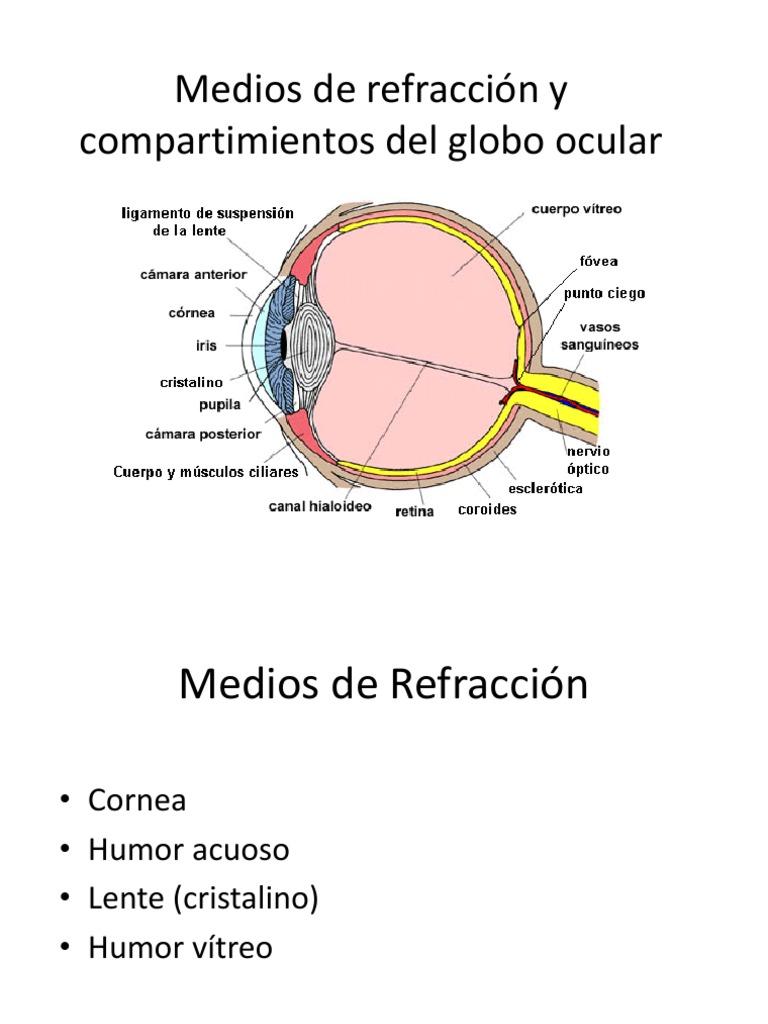 bad610ed18 Medios de refracción y compartimientos del globo ocular