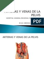 Arterias y Venas de La Pelvis