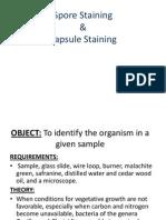 Spore Staining+ Capsule