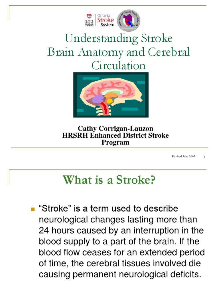 Understanding Stroke-Brain Anatomy and Cerebral Circulation   Stroke ...