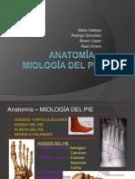 anatomia del pié