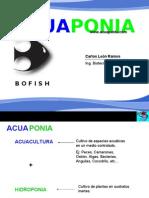 Acuaponia