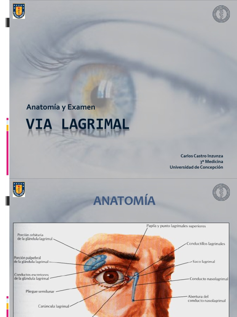 Magnífico Anatomía Saco Lagrimal Componente - Imágenes de Anatomía ...
