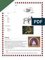 Organ Pernafasan Haiwan 11