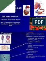 Cardiovascular Estructura, Circulacion,Flujo-estomato
