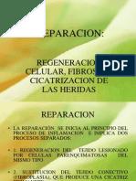 REPARACION CICATRIZACION