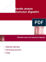 LP 07 Anexe Digestiv