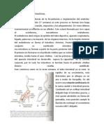 Formacion intestinos