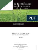 infestantes arroz - glossário vegetal