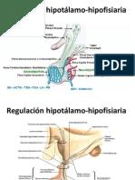 HIPOTALAMO HIPOFISIS