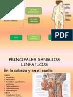 Exposicion Anatomia!!